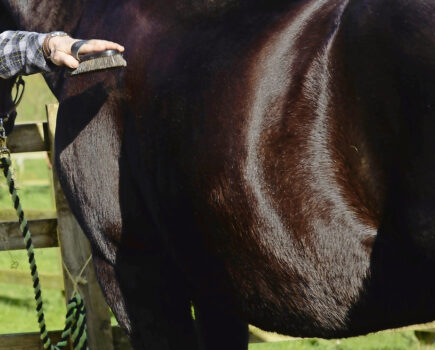 6 Ways You Can Help Get Your Horse's Coat Gleaming