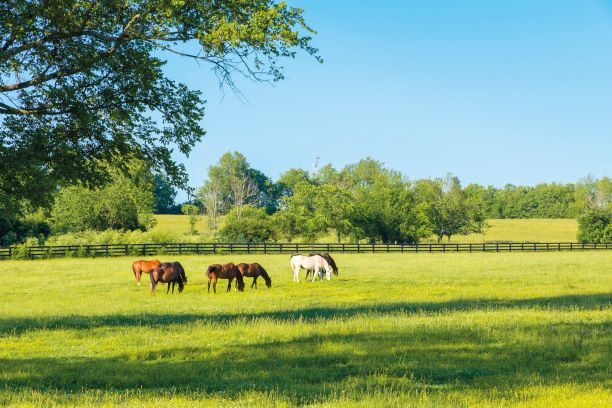 Vet advice: everything you need to know about your horse's vitamin D levels