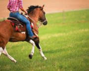 Better balance, lighter aids and a more responsive horse: 6 ways trying Western style could improve your English riding