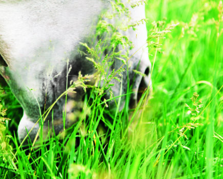 'No safety buffer': the truth about equine weight gain, spring grass and the risk of laminitis