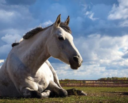 Vet advice: peritonitis explained — plus one pony's miracle recovery