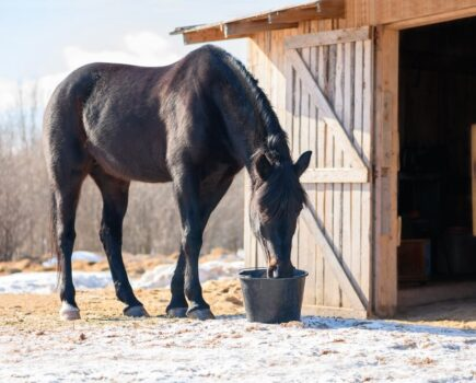 Worried Your Horse Isn't Drinking Enough? How Soaked Feeds Could Help