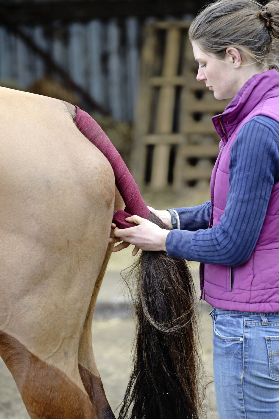 How Do I Put on a Tail Bandage on My Horse for Travelling?