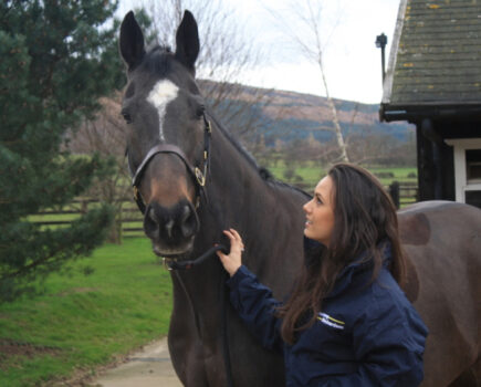 5 Things to Consider Before Travelling Your Horse
