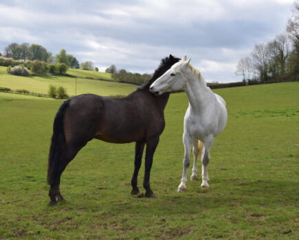 Your Horse's Social Behaviour Can Influence His Body Condition, Study Finds