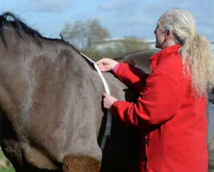 Is My Horse Really Overweight?
