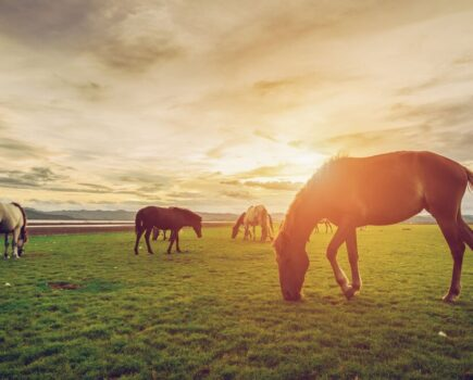 Could your horse be a calendar star? Entries open now for BETA's wall calendar competition